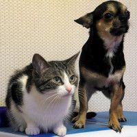 #dogalize Avvelenamento da marijuana nel cane e nel gatto, cause e cura #dogs #cats #pets