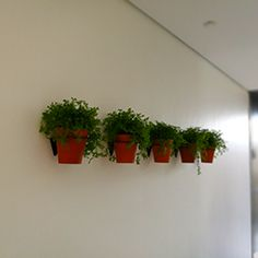Wall planter from Future Classics. See our full range