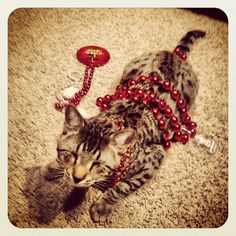 Oskar the Blind Cat plays with some beads.  I love Oskar and his brother Klaus, they are so adorable!