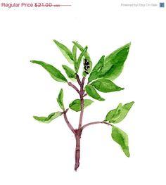July sale Basil art Print of original watercolor painting, herb, botanical, kitchen art ,green, home decor, minimalist