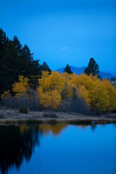 Blue Nightfall on Yellow Aspens