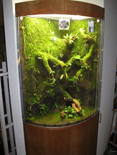 Orchidarium with EpiWeb-IIS 090120 | Flickr - Photo Sharing!