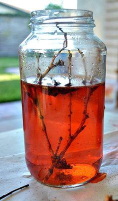 Udstillings glas med ting fundet på skovturen eller under leg i haven. Klik på billedet for vejledning og flere billeder. Hjemmesiden er på engelsk.