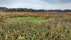 North Solent National Nature Reserve, next door!