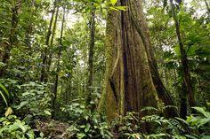 Amazonaksen sademetsä