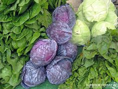 """Best Benefits Of Cabbages For Skin Hair And Health"""" posted by Saba on August 21 2013 via StyleCraze Cabbage Head, Purple Cabbage, Healthy Detox Soup, Cabbage Benefits, Burger Mix, Avocado Health Benefits, Honey Mustard Dressing, Summer Pasta Salad, Edible Gifts"""