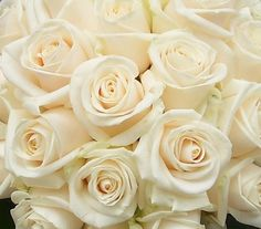 A touch of champagne with Vendella roses