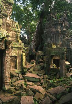 Jungle Ruins, Angkor Wat, Cambodia