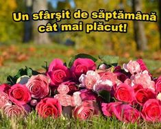 Sorin Leoveanu - Google+ Flowers, Plants, Sign, Google, Signs, Plant, Royal Icing Flowers, Board, Flower
