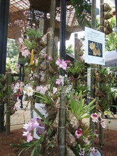 Medellin exposicion de orquideas. Feria de las flores