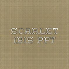 Scarlet Ibis PPT