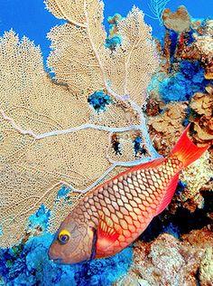 Snorkeling; Cayman Islands