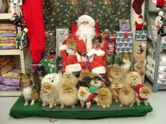 Oh. My. Goodness!  Too cute.. and probably my future Christmas card! Adorable!