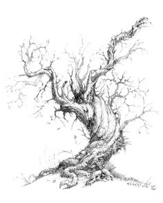 Magnolia Tree Drawing  For The Home  Pinterest  Magnolia trees