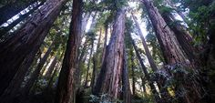 A guided awe walk: tap into a deeper sense of purpose and well-being with the first VR meditation of its kind—A 360 guided mindfulness practice through Muir Woods National Monument. Mindfulness Practice, Mindfulness Meditation, Guided Meditation, Muir Woods National Monument, Walking Meditation, Soul On Fire, Get Outside, Sustainable Living, Waterfall
