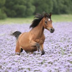 Colt running through flowers-picture to share, just copy/paste!