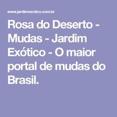 Rosa do Deserto - Mudas - Jardim Exótico - O maior portal de mudas do Brasil.
