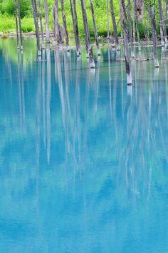 Aoi Ike, Biei, Hokkaido Blue pond(青池), Shirogane, 美瑛町 Biei-chō, Kamikawa-gun, Hokkaidō 071-0235, Japan