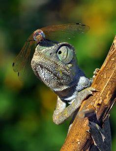Chameleon ~