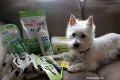 a prize pack I'm giving away!    www.PrestonSpeaks.com #dog #westie #pets