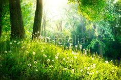 """Wall Mural """"wild, white, nature - spring nature. beautiful landscape. green grass and trees"""" ✓ Easy Installation ✓ 365 Days Money Back Guarantee ✓ Browse other patterns from this collection!"""