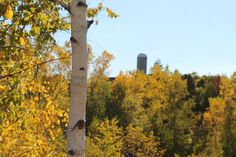 Another autumn shot outside if Green Bay Wisconsin.