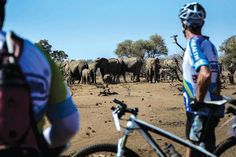 On yer bike! ‹ The Intrepid Explorer: Fancy a holiday in the saddle? Then make tracks for Fiona McIntosh's medley of mountain bike tours - www.intrepidexplorer.co.za