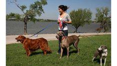 Dog Walking Norfolk MA - Reasons You Should Hire A Dog Walker