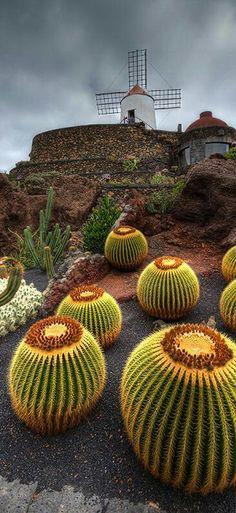 Lanzorate Spain...Garden Cactus...