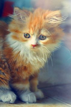 I is cutez!❤️