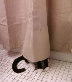 cats failing at hide and seek