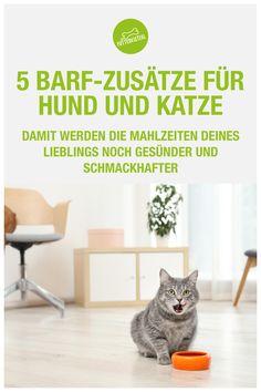 Heute möchte ich dir 5 wirkungsvolle, natürliche Zusätze vorstellen, mit denen du die BARF-Mahlzeiten deines Lieblings noch gesünder und schmackhafter gestalten kannst! Einige der folgenden Zutaten hast du vielleicht bereits in deiner Küche, ohne dir über ihre Einsatzmöglichkeiten in der BARF-Fütterung bewusst zu sein. Manche sind wiederum ganz besondere Wundermittel, die ich mit großer Sorgfalt recherchiert und in mein Futterkisterl-Sortiment aufgenommen haben. Cats, Blog, Animals, Home Decor, Meals, Gatos, Kitty Cats, Animaux, Animal