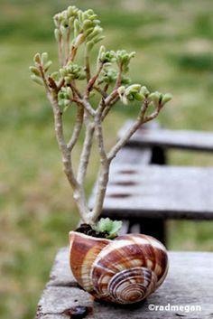 Sea Shell Planter Ideas to Show Off your Plants Succulent Pots, Cacti And Succulents, Planting Succulents, Garden Art, Garden Plants, House Plants, Balcony Garden, Terrace, Air Plants