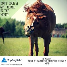 dont look a gift horse in the mouth - english idiom English Idioms, Horses, Gift, Animals, Animales, Animaux, Animal, Animais, Horse