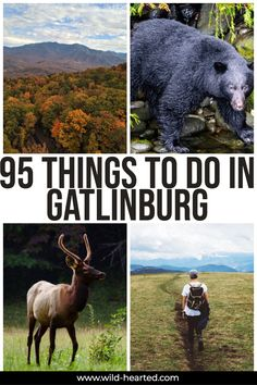 Outdoor Travel usa There are so many things to do in Gatlinburg to keep everyone busy. In fact, here are 95 things to do in Gatlinburg, Tennessee! guide to gatlinburg Visit Tennessee, Gatlinburg Tennessee, Tennessee Vacation, Ober Gatlinburg, Tennessee Cabins, Places To Travel, Places To Visit, Vacation Places, Stuff To Do