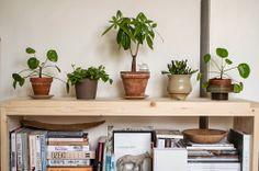 plants in ceramic pots, peperomia angulata   lacasita alessandra taccia