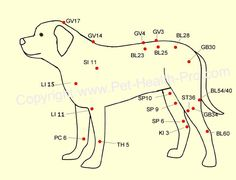 Pet Acupressure - Ancient Treatment Modality For Pets | Guiding Instincts