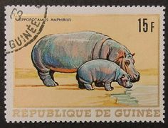 10843 - Framed Postage Stamp Art - Hippopotamus Amphibius - Animal