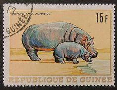 10843 - Framed Postage Stamp Art - Hippopotamus Amphibius - Animal (etsy)