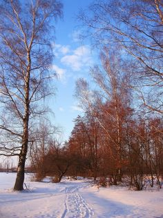 Nature View, Winter Beauty, Winter Scenes, Dolce, Winter Wonderland, Beautiful Places, Landscapes, Scenery, Photographs