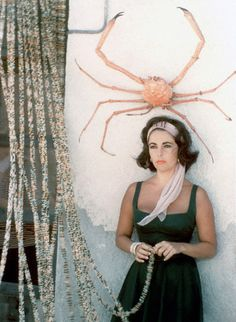 """neaststyle: """" Summer Style: Catherine Holly Elizabeth Taylor in Suddenly, Last Summer """" Golden Age Of Hollywood, Vintage Hollywood, Classic Hollywood, Taylors Falls, Bridget Bardot, Violet Eyes, Actrices Hollywood, Classic Movie Stars, Father Of The Bride"""
