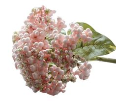 2 Pieces Artificial Acacia Fruit For Decorating House or Office, Pink/33*20cm ** You can find out more details at the link of the image.