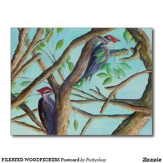 PILEATED WOODPECKERS Postcard