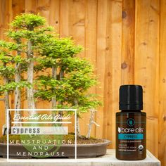 Cypress essential oil plays a prominent role in helping woman to get rid problems associated with menstruation and menopause. Add 2 drops of Cypress oil with 1 ml of sesame oil and massage it on your lower abdomen to assist with menstrual pain, heavy blood flow, irregular periods, mood swings and anxiety. With its unique healing properties, this natural massage regulates the blood flow in the pelvic area thus assisting to relieve blocked menstruation.