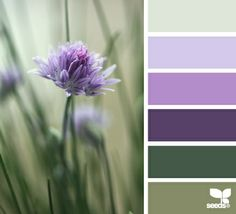 DesignSeeds | Design Seeds | Color Scheme
