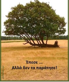 Motivational Phrases, Greek Quotes, Body Inspiration, Its A Wonderful Life, Wise Words, Favorite Quotes, Life Quotes, Wisdom, Health