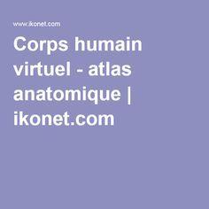 Corps humain virtuel - atlas anatomique   ikonet.com