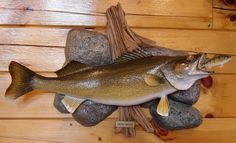 Lake Erie Walleye mount  by Jim Wendt   Jim's Taxidermy Port Clinton, OH