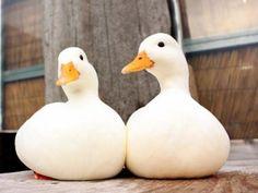 Rubber duckie models?