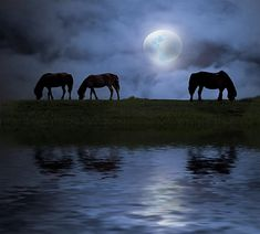 horses in the misty moonlight